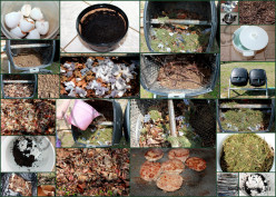 Composting: Beginners Guide