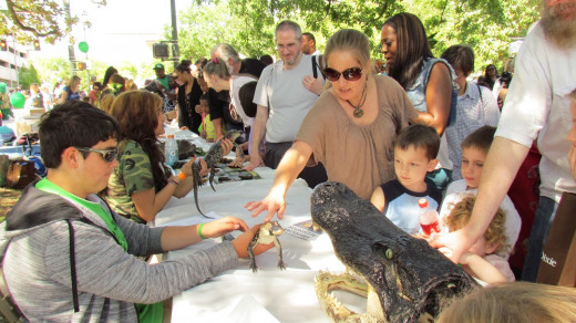 Participants who are young and young at heart enjoy petting baby alligators.