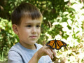 A Child and The Butterfly