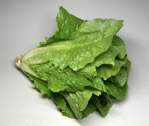 A full head of Romaine Lettuce. That is cut and ready to be washed and cut up for salads and or  washed and the leaves are used for in sandwiches to enjoy at lunch or anytime doing the day.