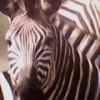 BacklarP profile image