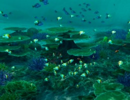 A beautiful reef, filled with colourful fish that you can document or add to your aquarium.