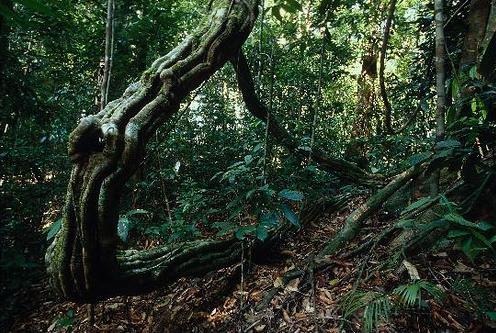 The Lush Evergreen Rainforest Of Malaysia