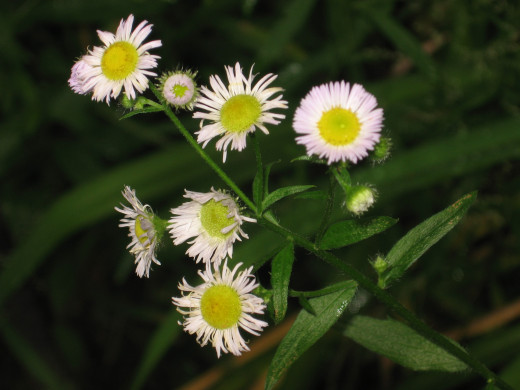 """Small flowers growing amongst weeds remind me to """"bloom where you are planted."""""""