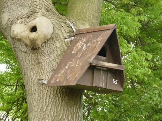 Bird boxes should be placed well out of reach of predators such as cats.