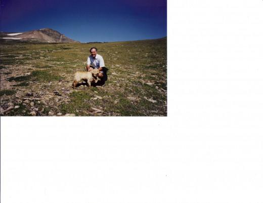 Walking the dog on tundra