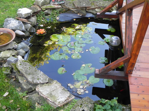 Even a small pond will provide a home and food for a variety of wildlife.