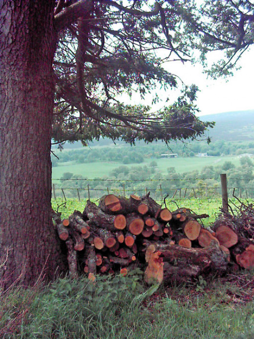 Log piles can provide shelter to animals such as woodlice, beetles and frogs.