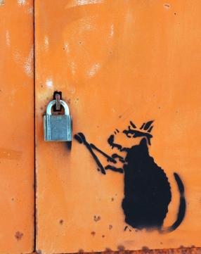 A cat burglar caught in the act