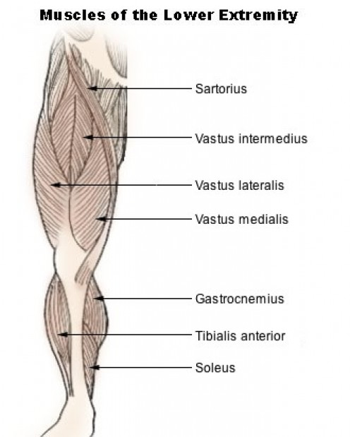 Lower Leg Muscle Group picture.