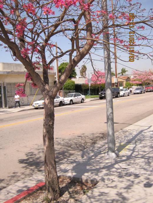 L.A. neighborhood near the Expo Line