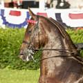 Stop Horse's Bit Chewing Habit