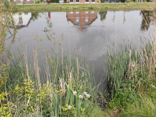 A reflection of the other side in the river 'Rotte'