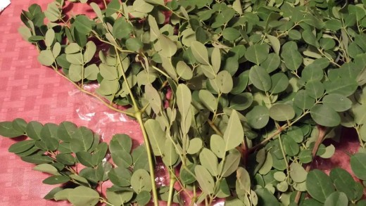 Moringa leaves.