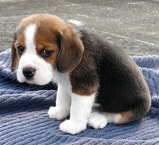 SAD puppy with no treats