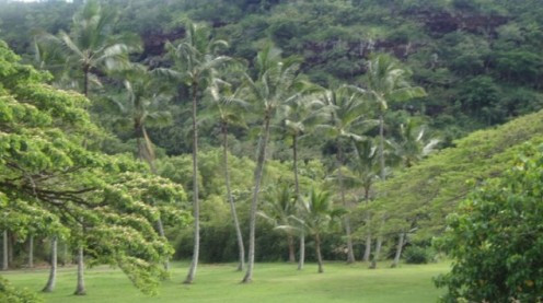 Photo of Palm Trees In Hawaii