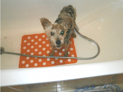 My dog Gonzo in the bath