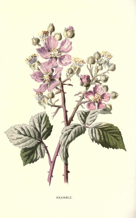 Familiar wild flowers 1887