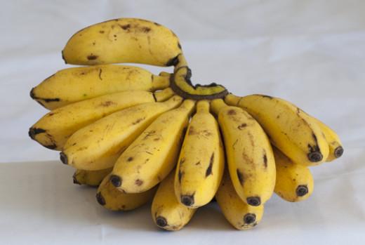 """Hand"" of Lady-Finger Bananas"