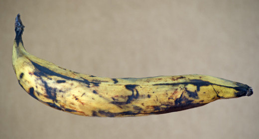The most popular cooking banana in Honduras, almost ripe and ready.