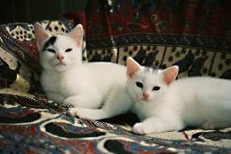 awake together on an armchair