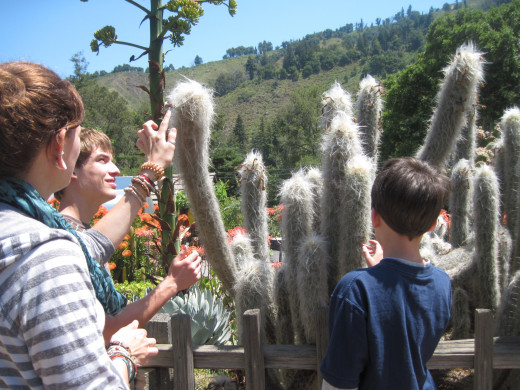 Fuzzy cactus! Of course no one could resist touching it.