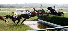 Steeplechase horse racing