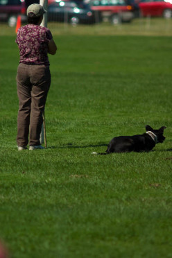 Dog  Training Methods: Fun Ways to Teach Your Dog to Fetch