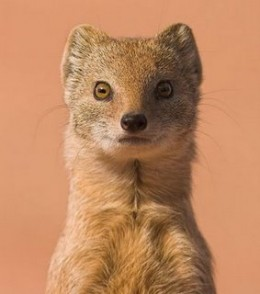 Weasel words will weasel their wee bit of bias into your whimsical writing.