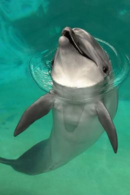 Dolphin from photobucket by hikari_miyako