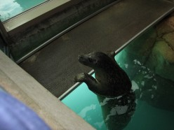 "Teaching a seal to do a ""back flip"" under water!"