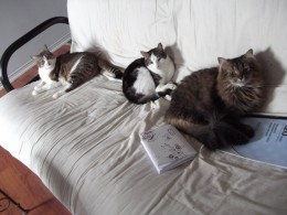 The three cats - two of which are new - are now very good friends!