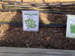 How do you irrigate you small home garden?