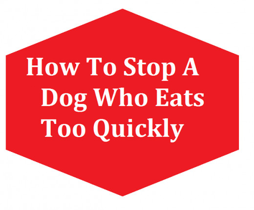 There is a simple way to stop a dog from eating too fast.
