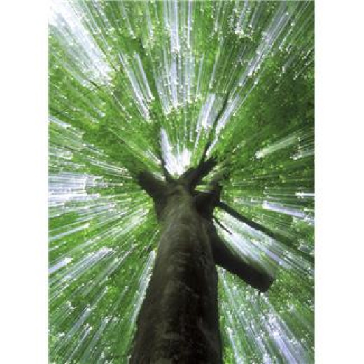 Stability is the result of endurance - existing through time.  A tree cannot take root by moving from place to place.