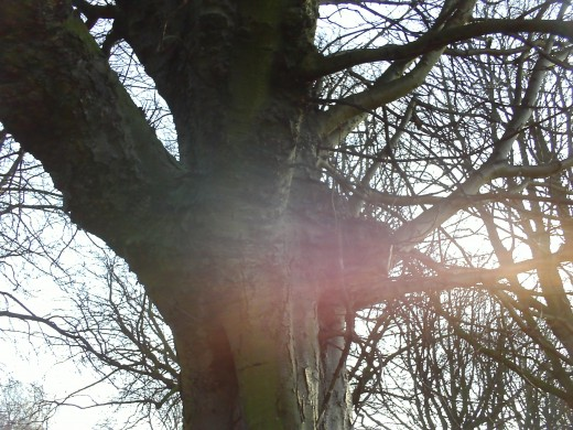 Sun shining through the tree.