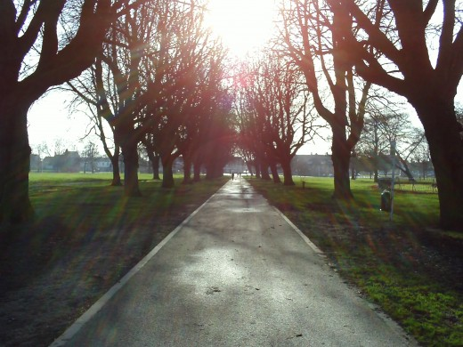 The sun shines on the main parks path and the trees all frame the photo nicely.