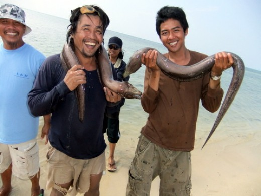 My Filipino staff with their moray eels that were caught in the Red Sea