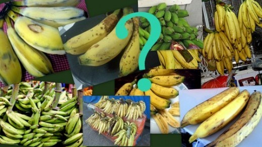 Which banana varieties are suitable for banana fritters?