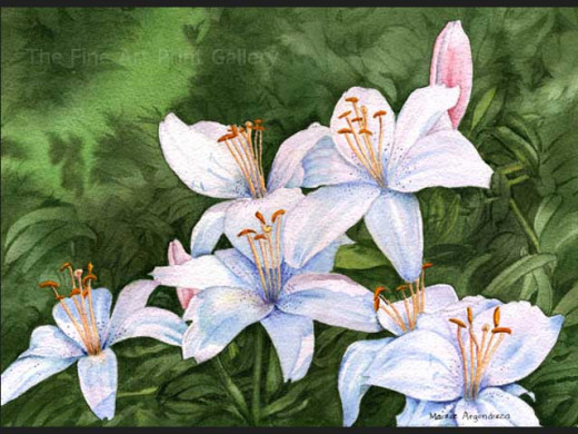 lilies-in-the-f...