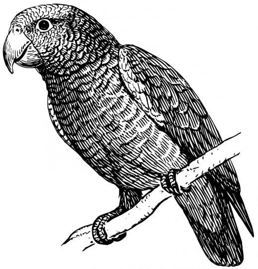 public domain parrot clipart