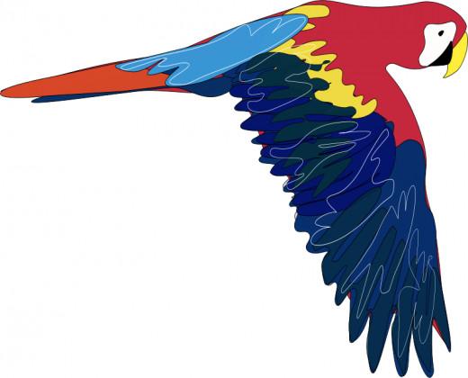 public domain parrot clip art