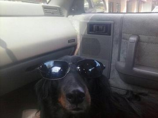 Harold Dog is A Lowdown Listener