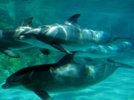 Dolphin Swim in Orlando Photo by flickr.com/photos/jasmic/