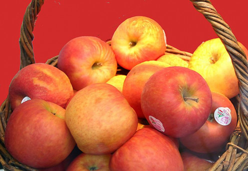 The basket of apples may have looked like these (without the stickers, of course!).
