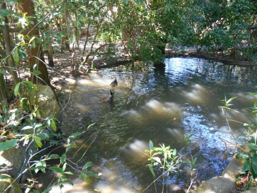 On Tom Sawyer's Island in Magic Kingdom