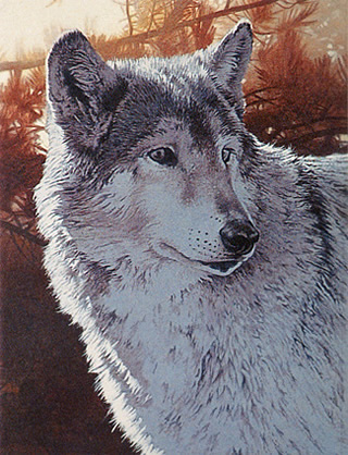 Wolf done in Acrylic paint
