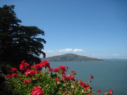 Scarlet geraniums in foreground; Angel Island in background