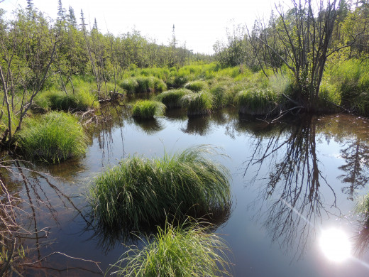 An inland marsh on Isle Royale