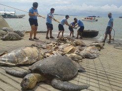What can you say about Chinese fishing boats hunting endangered sea turtle?